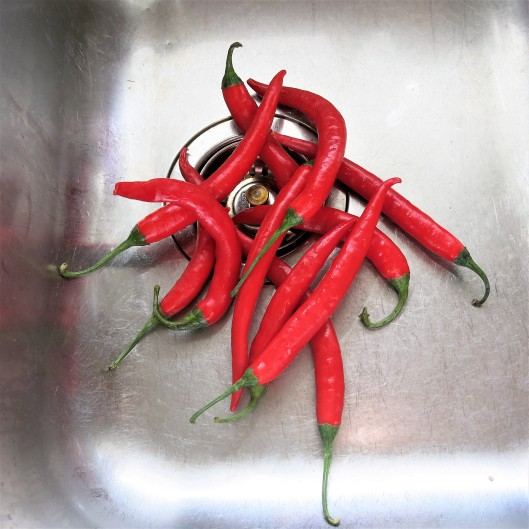 Thin, Red Chiles for Hot Pepper Rings in Olive Oil with Garlic