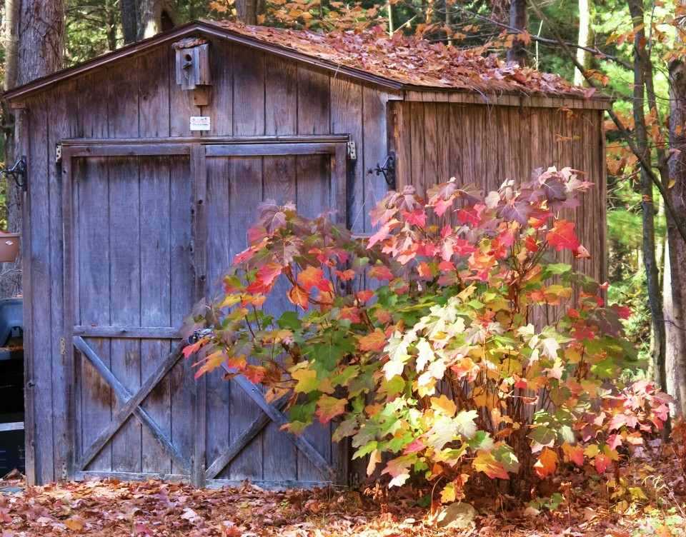 The Shed in Autumn