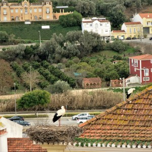 Storks on a Roof