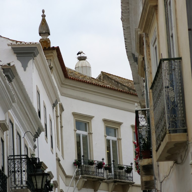 Faro, Portugal - Stork on a Chimney