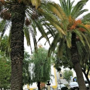 Small Square in front of Igreja de São Francisco - Tavira - Algarve
