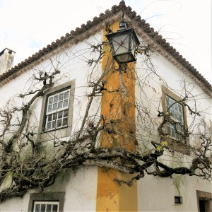 Vine in Óbidos - Portugal